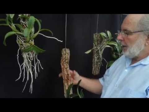 Como plantar muda de orquídea num toquinho - YouTube