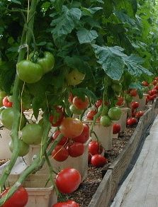 Home Hydroponics: A Fun Way to Grow Top Quality Produce