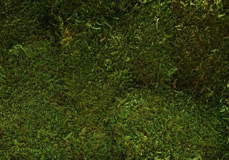 Staloluokta flatmoss moss green. Een mospaneel of moswand met Staloluokta flatmoss van Nature at home is een prachtige, onderhoudsvriendelijke, decoratieve, natuurlijke blikvanger in iedere ruimte. Bovendien heeft mos een sterke geluiddempende werking.