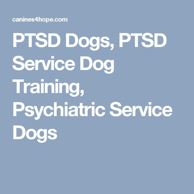Ptsd Service Dog Training