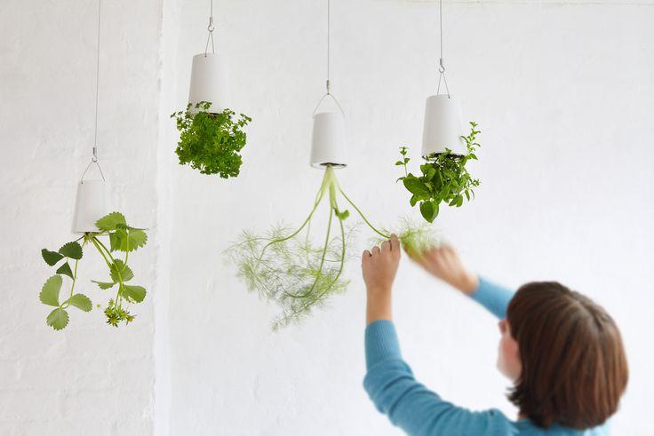 """Nå kan du lage din helt egen hengende hage! Bokstavelig talt en liten """"kjøkkenhage"""" med urter. Her er de fineste pottene som gjør det mulig."""