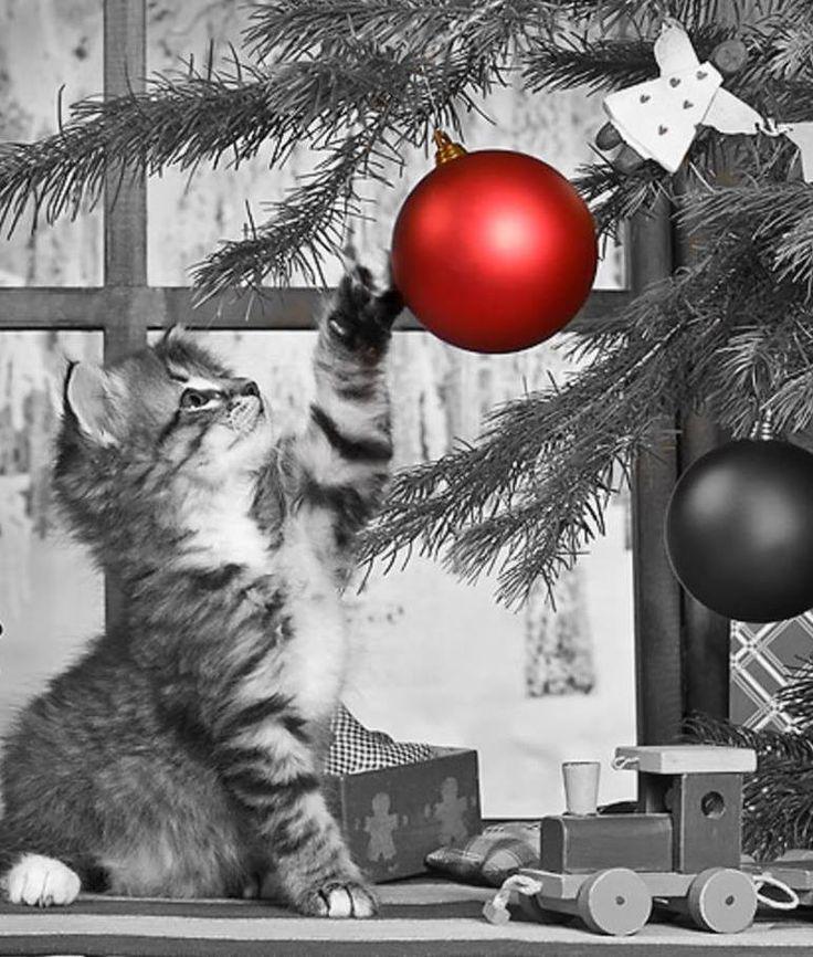 Christmas la magia del natale