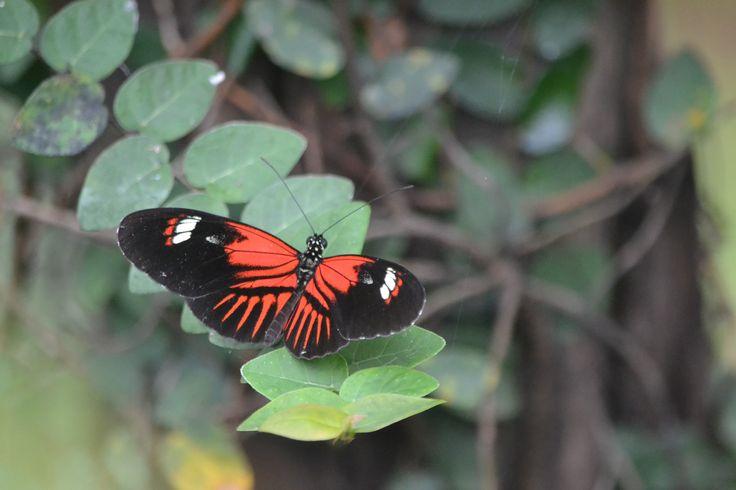 Schmetterlingspark in Wittenberg