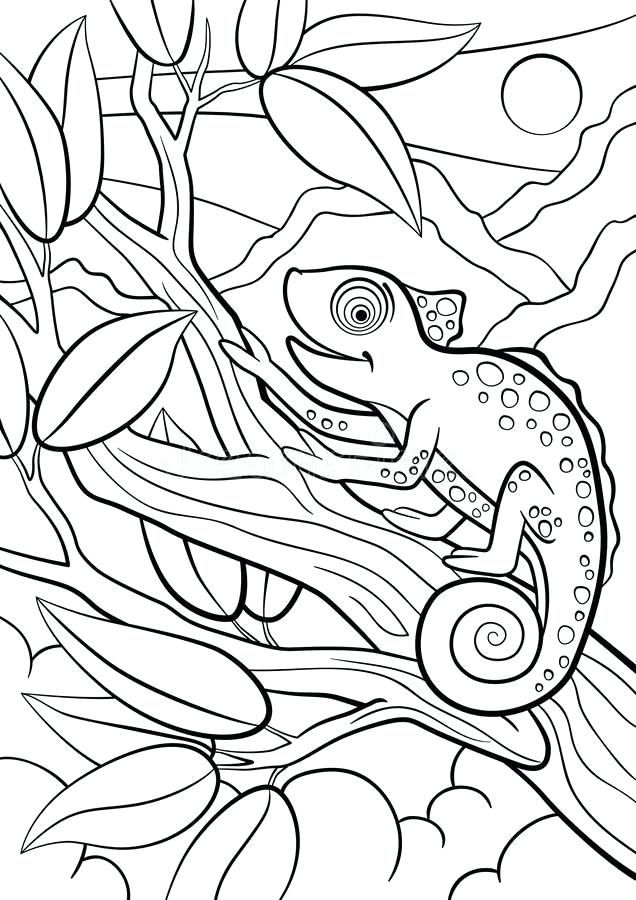 Chameleon Coloring Pages Best Coloring Pages For Kids Animal Coloring Pages Coloring Pages Coloring Pages Inspirational