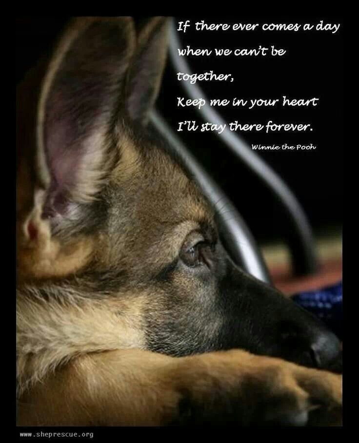 German Shepherd Missing You Quotes. QuotesGram | dogs ...