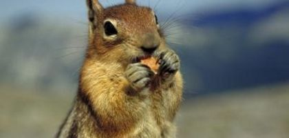 How to Prevent Squirrels From Eating Your Halloween Pumpkins | eHow