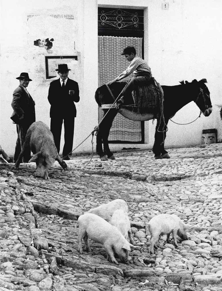 Puglia, di Gianni Berengo Gardin, 1958.