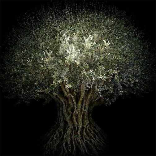 Trees | Irene Kung
