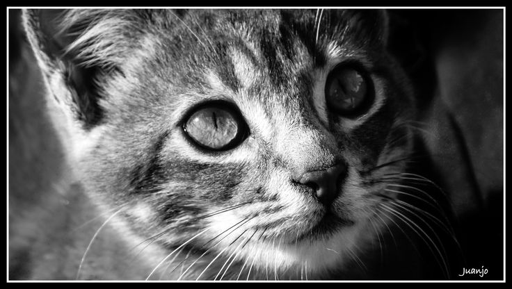 CAT by Juan Jose Hidalgo García on 500px