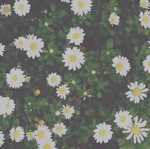 Image result for daisy aesthetic