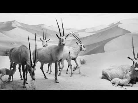 ▶ El Cambio - Cuenta Expansión de BANCO SABADELL - YouTube