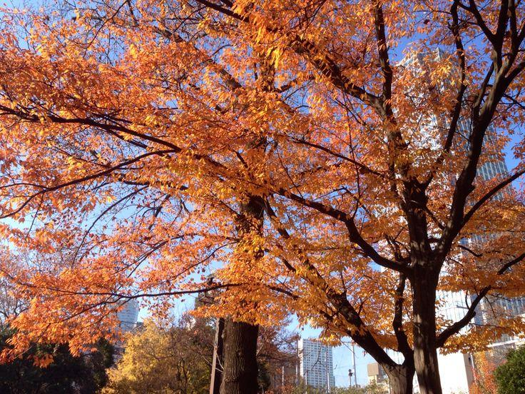 秋色残る芝公園。