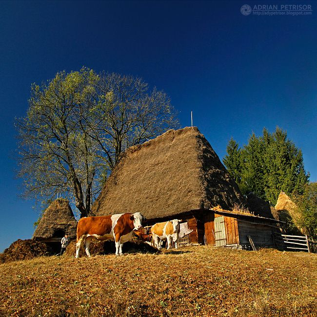 Rural homestead in the Apuseni mountains.  ~ Apuseni, Romania - Photo by Adrian Petrisor