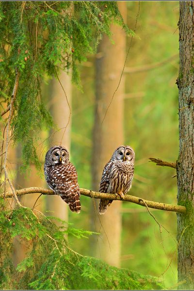 earthdaily:Forest Keepers by Jess Findlay