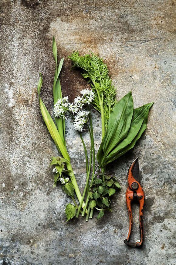 Przyprawy - Blog o przyprawach, ziołach, zdrowym odżywianiu i gotowaniu : Lubczyk - przyprawa do zup i skuteczny afrodyzjak