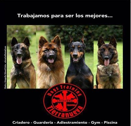 TIERRA NUEVA colegio, entrenamiento, guardería, peluqueria, accesorios y criadero canino.