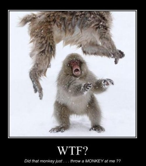 69 Best Stuff That S Just Me Images On Pinterest: Did That Monkey Just Throw A MONKEY? See More Funny Pics