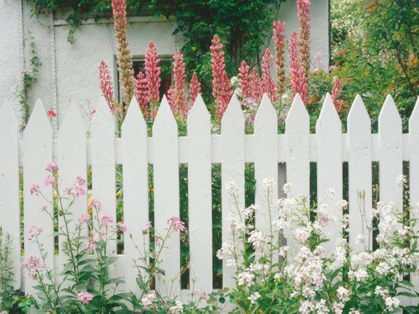 Holzzaun weiß Blumen Sichtschutz hohe Pflanzen