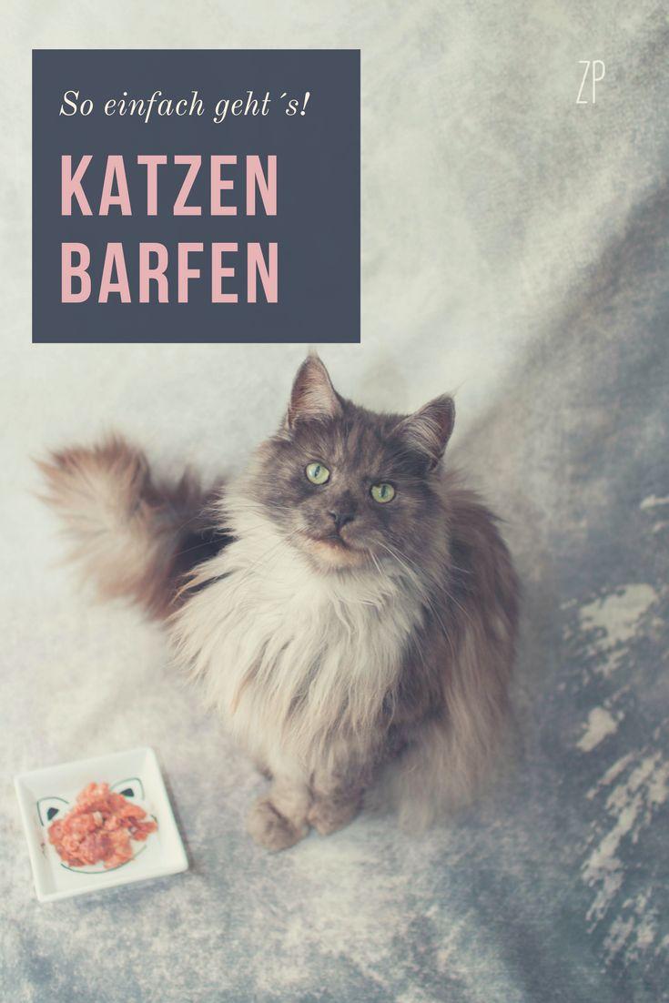 Keine Angst mehr vor BARF! Mit dem Komplett Paket von eBarf für Katzen, kannst du sofort mit dem Barfen anfangen! Es enthält die optimale Zusammensetzung von Fleisch und Nahrungsergänzungsmitteln!