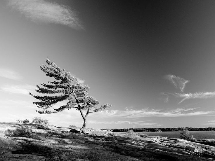 File:Wind Tree Clouds.jpg cc license