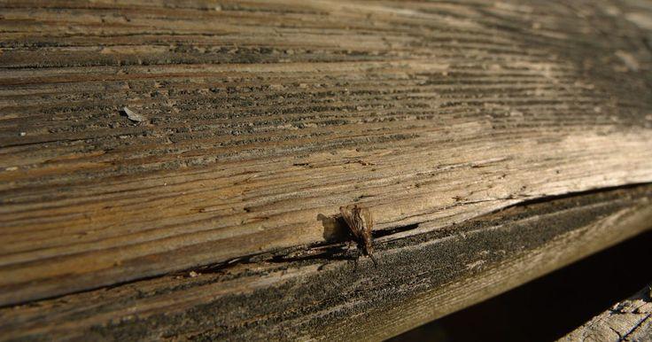 Como preparar um tapume de madeira para ser pintado. Tapumes de madeira oferecem beleza e charme rústico para muitos lares. Com o tempo, o tapume de madeira previamente pintado pode começar a criar bolhas, cascas ou soltar sua tinta devido a condições climáticas adversas ou um trabalho impróprio ao preparar a madeira para a pintura. Seguindo técnicas específicas para preparar a madeira subjacente de ...