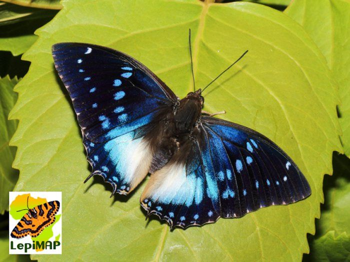 LepiMAP's butterfly-filled LepiBASH - Africa Geographic