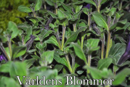 Världens Blommor Norra Långgatan 16 Landskrona 0418 65 11 59