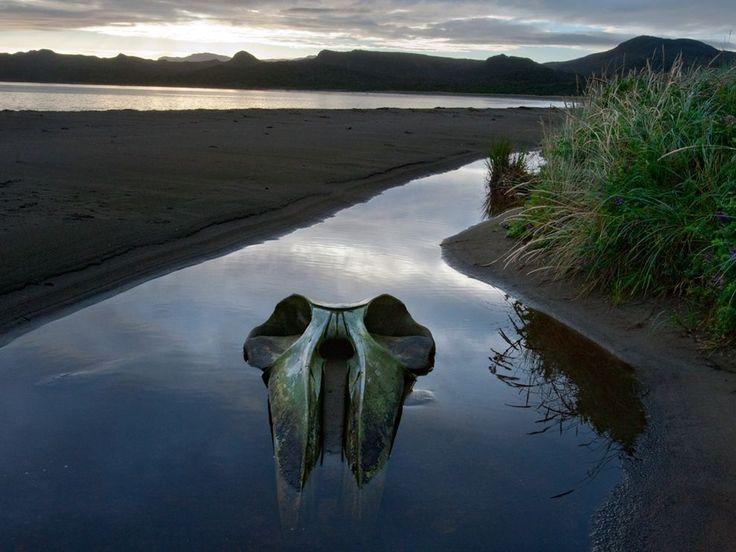 Sei Whale Skull, Chile | 1,000,000 Places