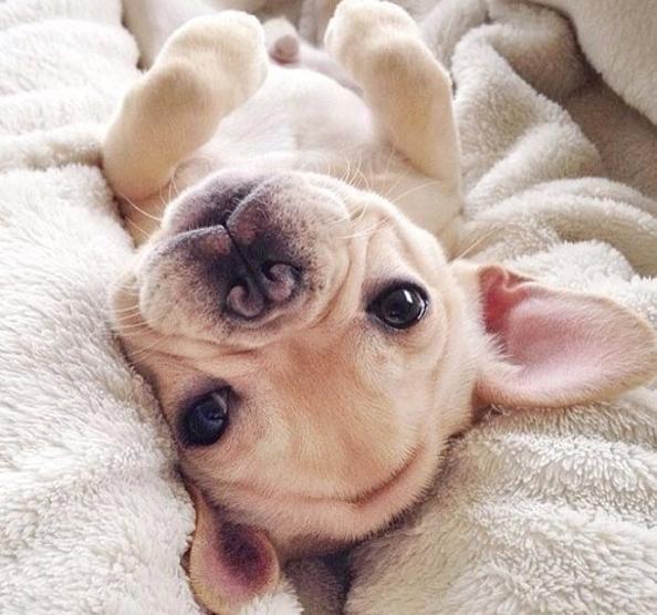 La Stampa - Musi da bulldog, 19 scatti per celebrarne la bellezza
