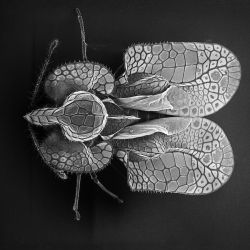 David M. Phillips captures insects under an electron microscope to reveal their intricate details.