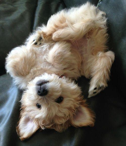 what a cute animal!