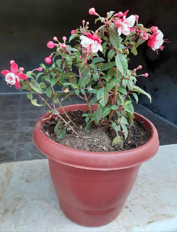 Plants Planters Planter Pots