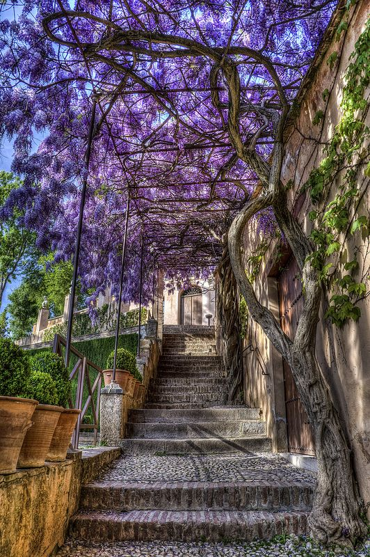 Stairway in Generalife Gardens, which reside above the Alhambra in Granada, Spain