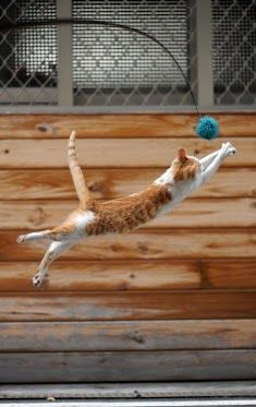 .Trying out for the beach volleyball team!