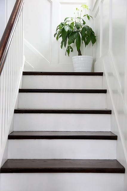White Painted Stairs Plant At Landing Very Similar