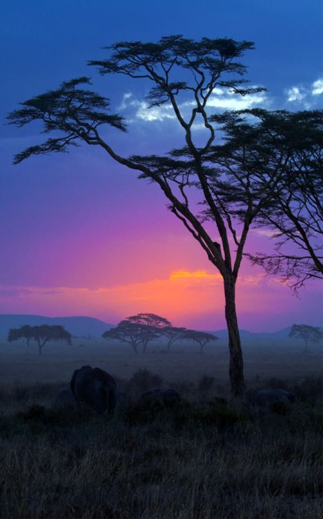 Kruger National Park, South Africa. HC