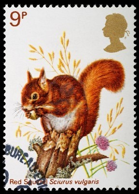 UNITED KINGDOM - CIRCA 1977: A British Used Postage Stamp celebrating British Wildlife, showing a Red Squirrel, circa 1977