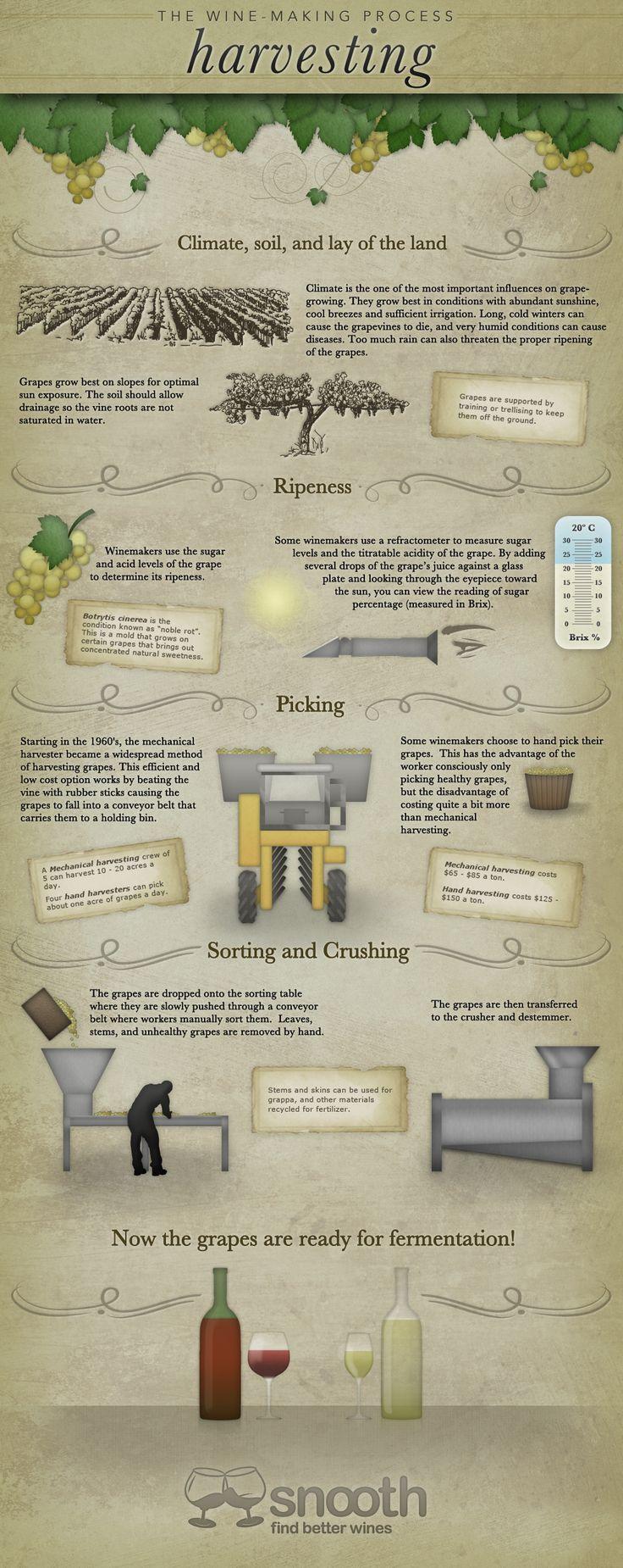 "The Wine Making Process: Wine Harvesting Infographic www.LiquorList.com ""The Marketplace for Adults with Taste!"" @LiquorListcom #LiquorList"
