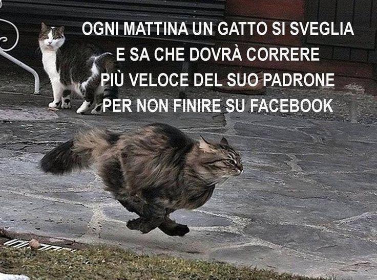 Ogni mattina un gatto si sveglia e sa che dovrà correre più veloce del suo padrone per non finire su facebook