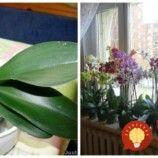 Najcennejšia rada, ako zalievať orchideu jediným správnym spôsobom: Toto prebudí aj rastlinu, s ktorou ste to už chceli vzdať!