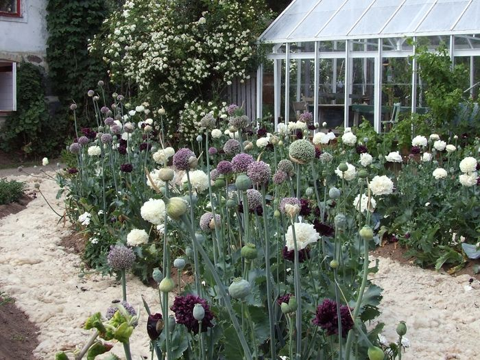 Mandelmann.se » Trädgården