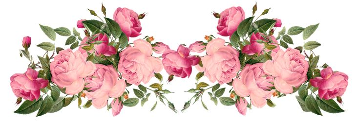 Free Pink Roses Border, Vintage Style