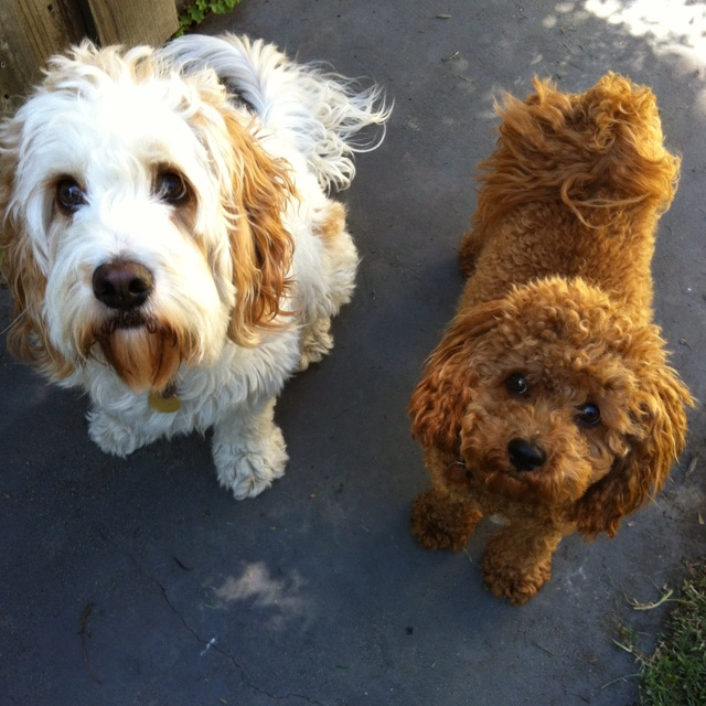 Dex and Rusty hoping they got mail