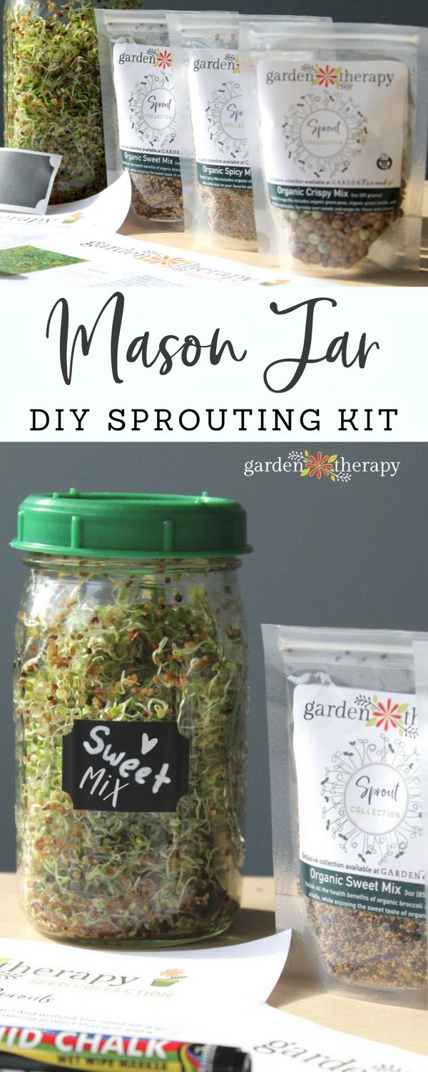 """Collage image of a glass jar full of sprouts labelled """"Sweet Mix"""" and three plastic packages full of seeds with text overlay """"Mason Jar Sprouting DIY Kit"""""""