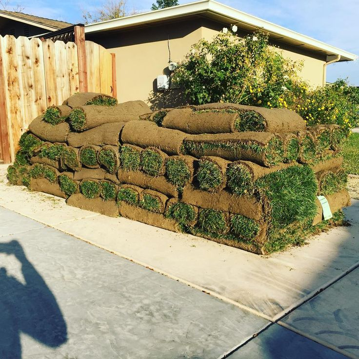 Laying down 1000 sqft of sod today @armentalandscapeco #armentalandscapeco #landscaping #landscape #hardscape #contractor #company #backyard #renovation #project #landscapedesign #sod #grass #lawn #working #workout #bayarea #wine #livermoreca #brentwoodca #danvilleca #sanramon #walnutcreek #sanfrancisco #oakland #california #norcal