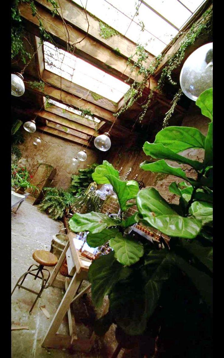 AHS Coven   Greenhouse, Fiddleleaf Fig Tree, Glass Pendant Lights