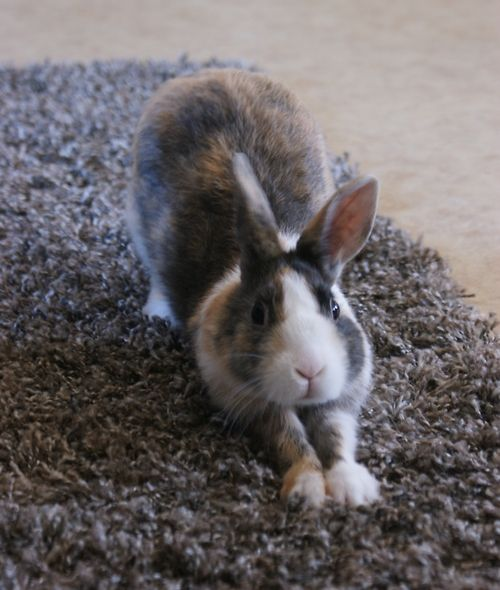 There Is Nothing More Terrifying Than A Bunny Yawning | Bunny ...