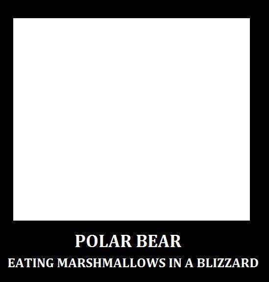 polar bear: I Do, Polar Bears, Funny Boards, Funny Stuff, Puns Funny, Mmmm Marshmallows, Animal Editing, Bears Eating, Eating Marshmallows