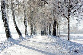 Bomen Omzoomde Avenue, De Winter, Sneeuw
