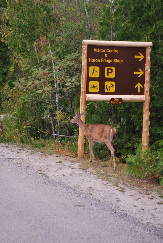 We found deer